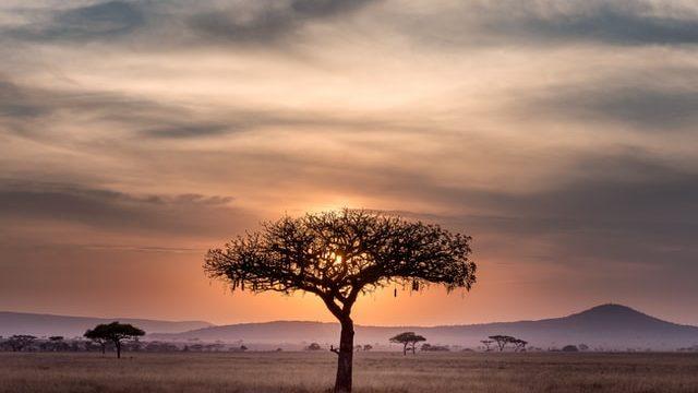 南アフリカに隠された求人